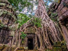 Ta Prohm Tapınağı, Kamboçya