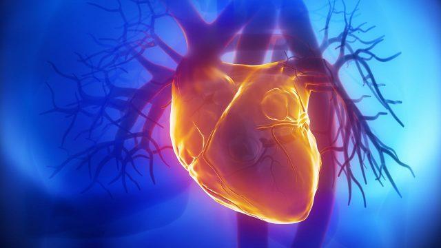 Yapay Organların Avantaj ve Dezavantajları
