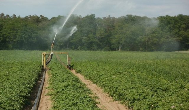 Sulamanın Çevresel Etkileri Nedir?