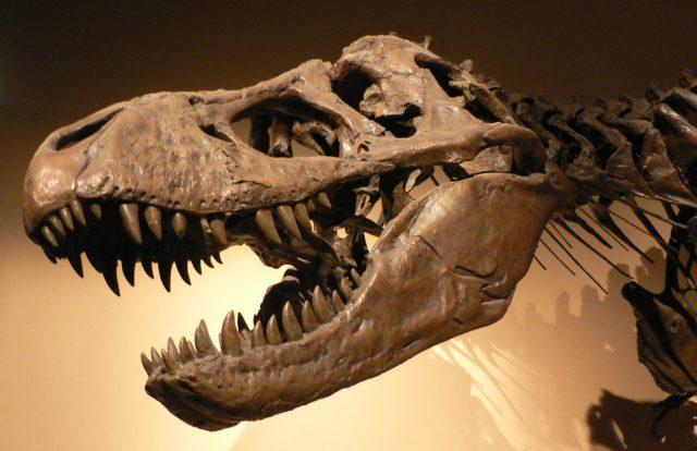 Fosil Nedir, Nasıl Oluşur ve Nasıl Bulunur?