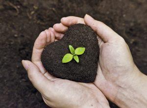 Organik Tarım Nedir?
