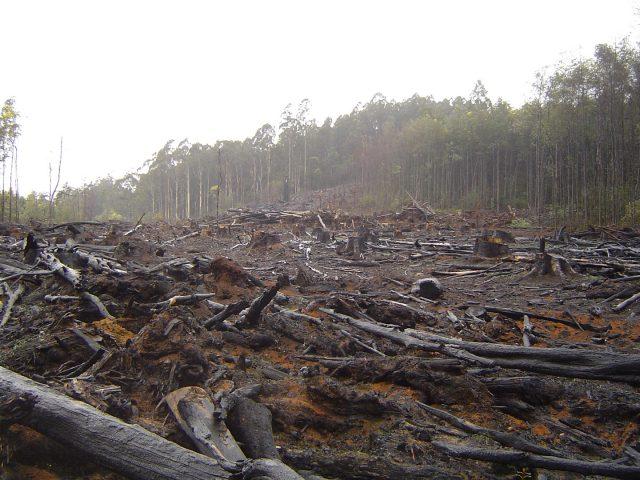 Orman Kullanımının Çevresel Sonuçları