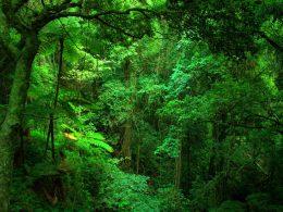 Yağmur Ormanlarında Biyoçeşitliliğin Azalmasında İnsanın Rolü