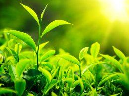Fotosentez Nedir, Canlılar İçin Önemi Nedir?