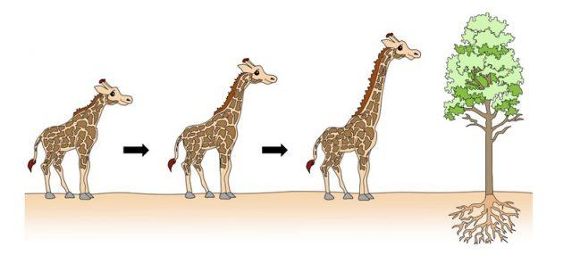 Lamarck'ın Evrim Hakkındaki Görüşleri
