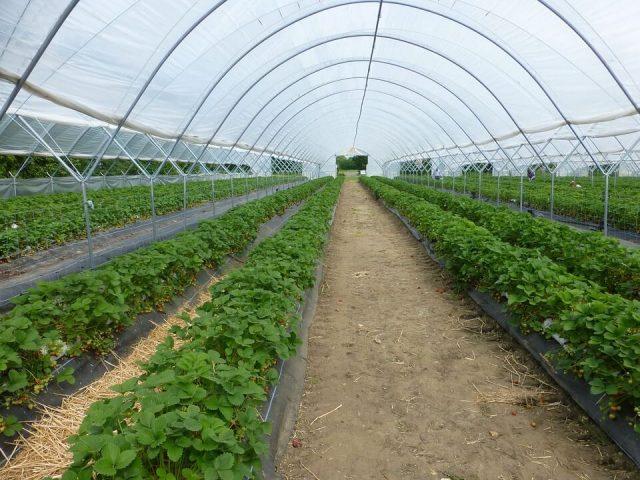 Seralarda Tarımsal Ürün Miktarını Artırma Yöntemleri