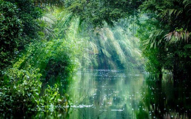 Dünyadaki Eşsiz Yerler: Tortuguero Ulusal Parkı