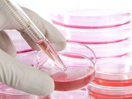Hücre Çalışmalarının İnsan Yaşamı İçı̇n Önemi