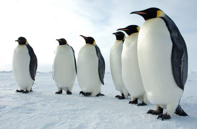 Kutuplarda Hangi Hayvanlar Yaşar?
