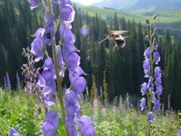 Böcekler En Fazla Ne Kadar Yükseklikte Uçabilir?