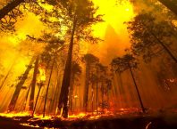Orman Yangınlarından Korunma Yolları Nelerdir?