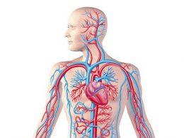 Dolaşım Sistemi Rahatsızlıkları Ve Sağlığının KorunmasıDolaşım Sistemi Rahatsızlıkları Ve Sağlığının Korunması
