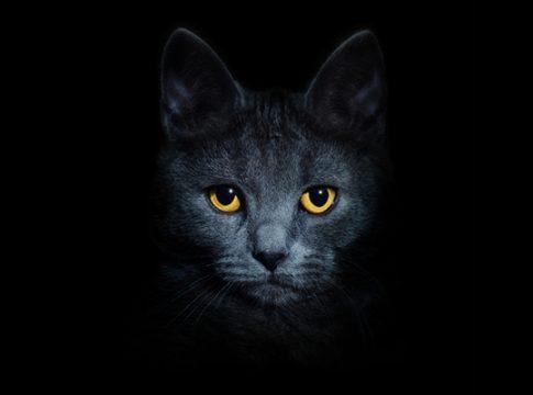 Hayvanlar Karanlıkta Nasıl Görür?