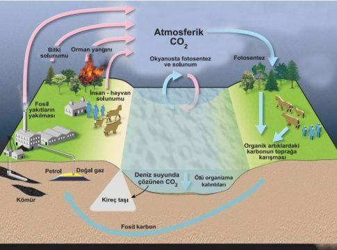 Karbon Döngüsü Nedir, Açığa Çıkmasının Ve Doğada Azalmasının Başlıca Nedenleri Nelerdir?