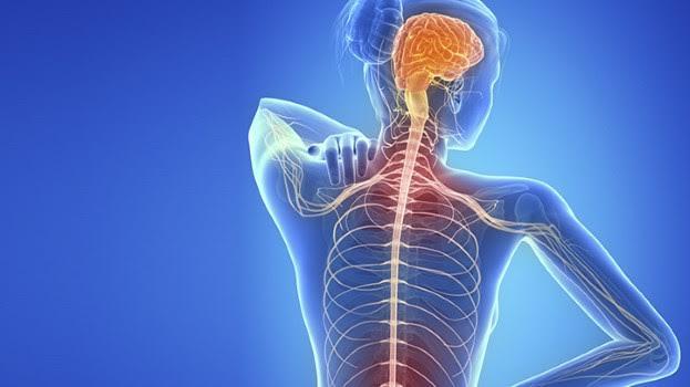 Multipl Skleroz (MS) Nedir, Belirtileri Nelerdir?