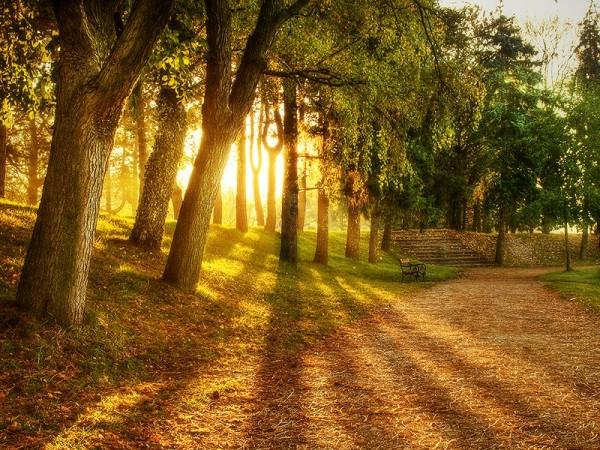 Neden Bazı Ağaçlar Yapraklarını Dökerken Bazıları Dökmez?