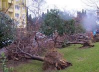 Şiddetli Rüzgar Ve Fırtınadan Korunma Yolları
