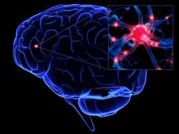 Sinir Sistemi Rahatsızlıkları ve Sağlığının Korunması