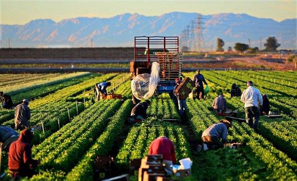 Tarım Sektörünün Ekonomideki Önemi