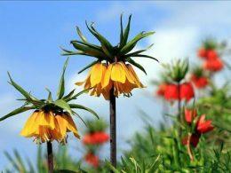 Türkiye'de Endemik Bitkiler