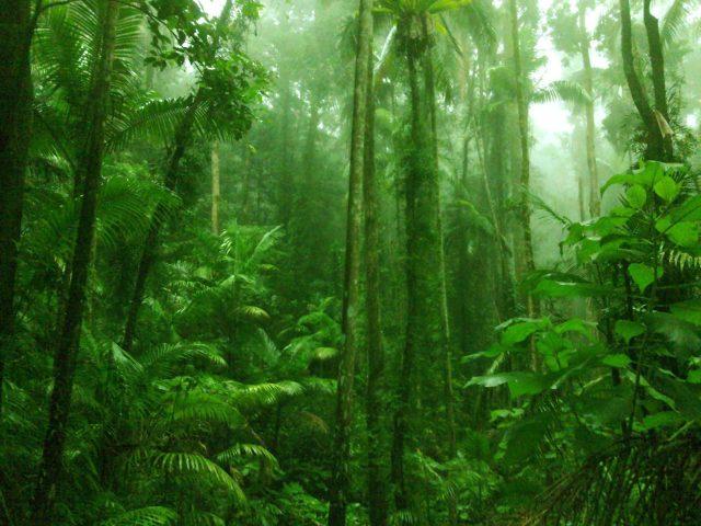 Yağmur Ormanları Ve Biyoçeşitlilik