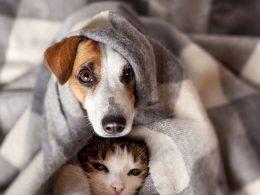 Kedi ve Köpeğimize Tasma Seçerken Dikkat Etmemiz Gereken Özellikler