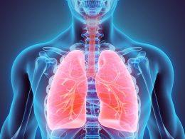 Akciğerin Yapısı Nasıldır, Vücuttaki Görevleri Nelerdir?