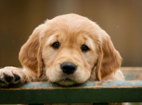 Köpekler Hakkında İlginç Bilgiler