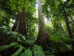 Yağmur Ormanları