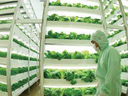 Tarımın Geleceği: Dikey Çiftçilik Nedir?