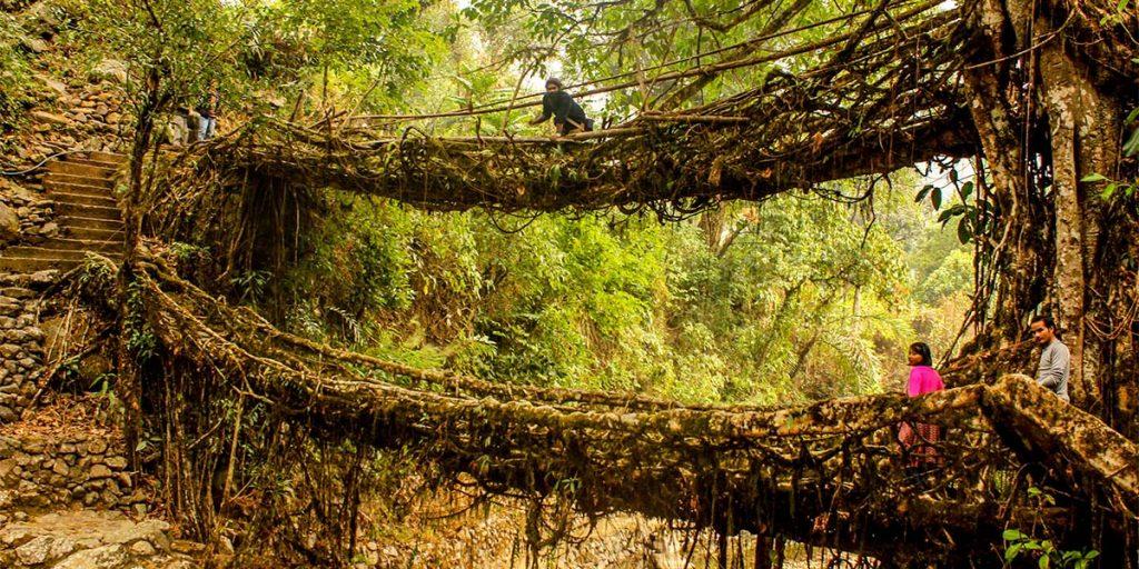 Yaşayan Kök Köprüler, Hindistan