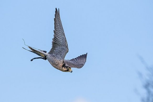 Dünyanın En Hızlı Kuşları