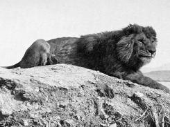 20. Yüzyılda Nesli Tükenen Hayvanlar