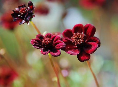 Dünyanın En Nadir 10 Çiçeği
