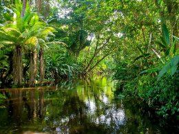 Dünyanın En Büyük Yağmur Ormanları